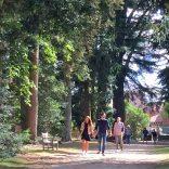Un été sous les arbres